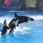 SeaWorld contact ban