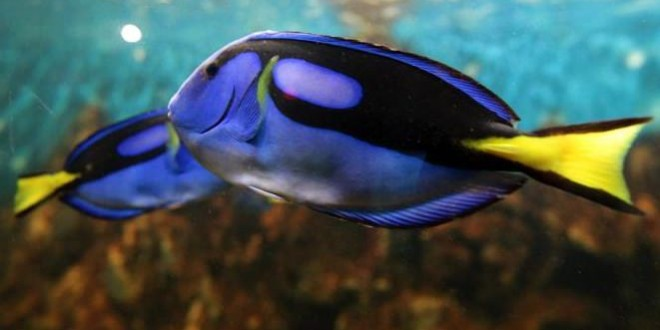 Global warming 'will drive fish towards poles', study shows