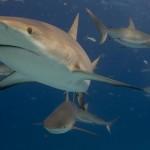 Shark Crash : Truck Bringing Sharks To New York Aquarium Crashes In Florida, One Shark Dead (Video)