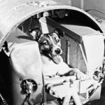 Laika the Cosmonaut Dog: USSR sends first living creature into orbit