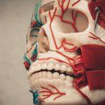 Researcher lauds world-first 'head transplant' a success