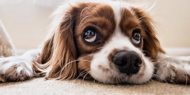 Researchers Say Dogs Are Attracted to Smiling Human Faces