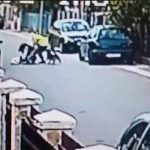 Stray Dog Rescues Woman From Mugger (Video)