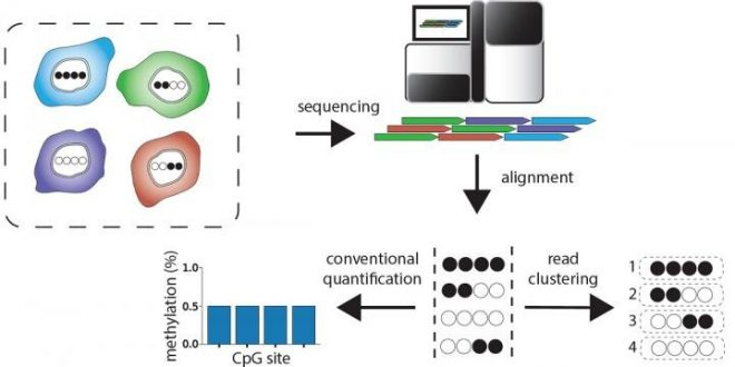 Novel software reveals molecular barcodes that distinguish different cell types (Study)